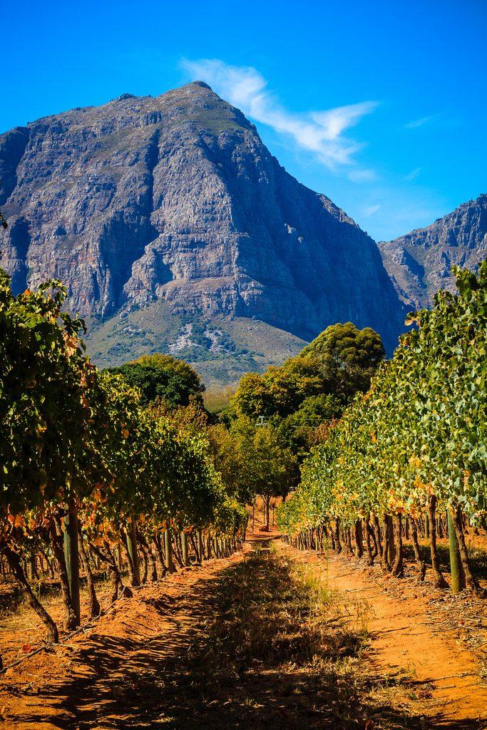 L'industrie du vin en Afrique du sud
