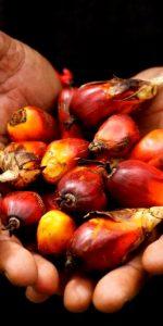 huile_palme