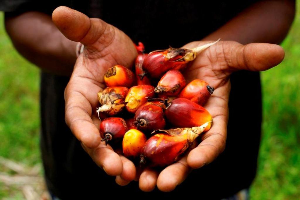 HALTE AUX VERGÉTURES : Huile de palme & Beurre de karité