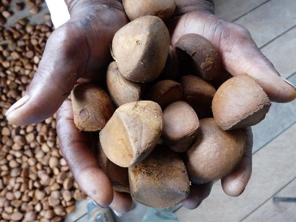 TOULOUCOUNA : L'huile miraculeuse